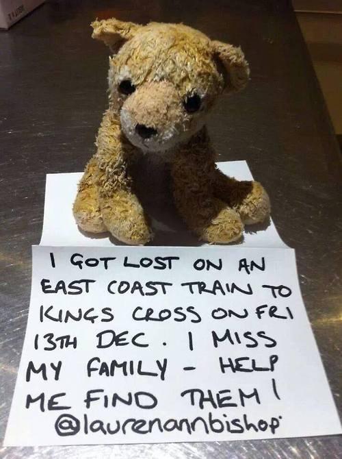 Social Media Story: Bär sucht seine Familie